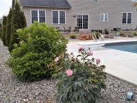 Shrubs and flowers with stone ground cover around a swimming pool