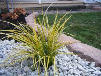 Flower garden design, plant with gray stones around it and large stones for flowerbed edging