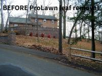 Before ProLawn leaf removal services
